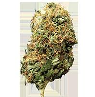 Hemp CBD Buds (trimmed)